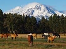 De Berg van de Zuster van het noorden Royalty-vrije Stock Foto
