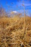 De Berg van Fuji Royalty-vrije Stock Fotografie
