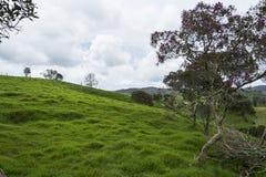 De berg van het landschap Stock Afbeeldingen