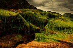 De berg van het zeewier Stock Foto