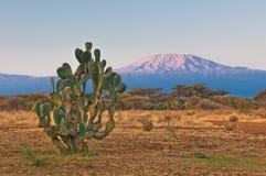 De berg van Kilimanjaro bij de zonsopgang Stock Afbeelding