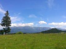 De berg van Roemenië Royalty-vrije Stock Foto
