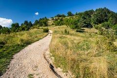 De berg van Tamper, Brasov, Roemenië Royalty-vrije Stock Foto
