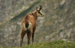 De berg van Tatra Royalty-vrije Stock Fotografie