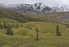 De Berg van vouwen in Noordelijke Rockies Stock Afbeelding
