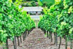 De berg volkach aard die van de Frankenwijn neer drinken royalty-vrije stock foto's