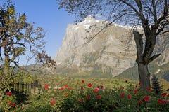 De berg Wetterhorn in Grindelwald Stock Afbeelding