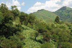 De bergen Alma Ata van Zailiyskialatau Royalty-vrije Stock Foto's