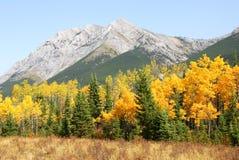 De bergen en de bossen van de herfst royalty-vrije stock afbeelding