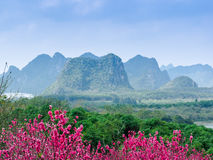 De bergen en het bos van de perzikbloesem Stock Foto's