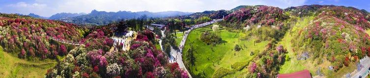 De Bergen met azalea's worden behandeld die Stock Afbeelding