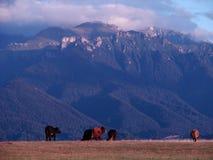 De Bergen van Bucegi Stock Afbeelding
