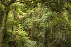 De bergen van Bunya Stock Foto