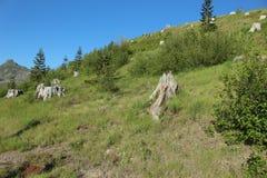 De bergen van de cascadewaaier royalty-vrije stock foto's