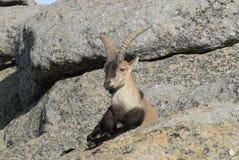 De Bergen van Gredos Stock Foto