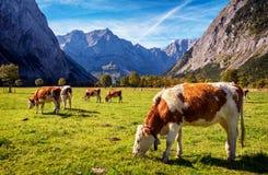 De Bergen van Karwendel Royalty-vrije Stock Afbeeldingen
