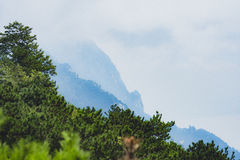 De bergen van Lushan Stock Foto's