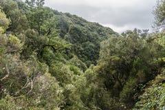 De bergen van madera Royalty-vrije Stock Afbeelding