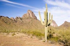 De bergen van Picacho stock afbeeldingen