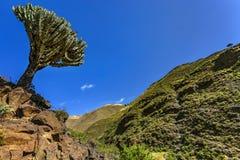 De Bergen van Simien, Ethiopië stock afbeelding