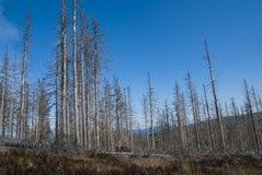 De Bergen van Sumava Stock Foto