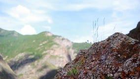 In de bergen zijn stenen, handbediende camera stock footage