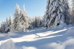 De bergenlandschap van de winter Bomen die met verse sneeuw worden behandeld stock afbeeldingen