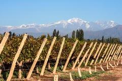 De bergketen van de Andes, in de Argentijnse provincie van Mendoza royalty-vrije stock foto