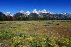 De bergketen van Teton Stock Fotografie