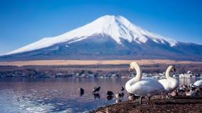De Berglandschap van Fuji van het zwaanmeer royalty-vrije stock foto