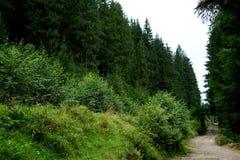 De bergrivier carpathians ukraine Stock Foto