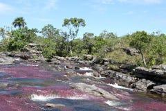 De bergrivier van Canio Cristales. Colombia Royalty-vrije Stock Foto