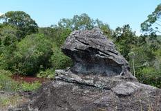 De bergrivier van Canio Cristales colombia Stock Afbeeldingen