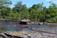 De bergrivier van Canio Cristales colombia Stock Foto's