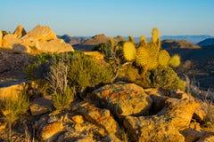 De Berguitzicht van de Mojavewoestijn stock foto