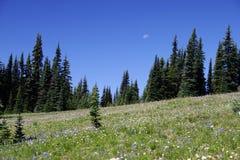 De bergweide van de zomer Stock Foto