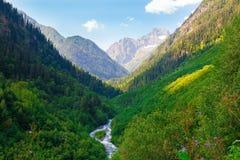 De bergzomer dag Groene pijnboombos en rivier stock foto's