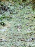 de berijpte bostextuur van het de weg groene gras van de vloergang Royalty-vrije Stock Foto's