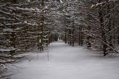 De berijpte bosweg van het de Wintersprookjesland Royalty-vrije Stock Foto's