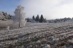 De berijpte scène van het de winterlandschap Stock Afbeeldingen