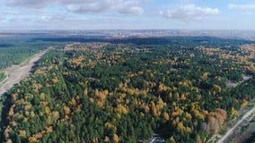 De berk en de pijnboomhout van de panoramaherfst onder schilderhemel stock videobeelden