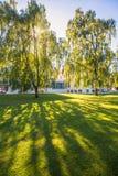 De berkboom in de zon Stock Fotografie