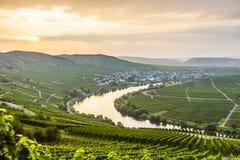 De beroemde Bochtigheid van Moezel met wijngaarden royalty-vrije stock foto