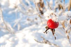 De bes van de winter royalty-vrije stock afbeeldingen