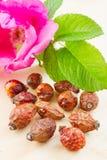 De bes van rozebottels en rozebottelbloem Stock Foto