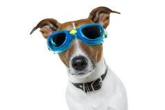 De beschermende brillen van de hond Stock Foto's