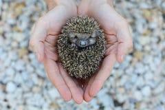 De bescherming van het milieu: Weinig dier - egel stock afbeeldingen