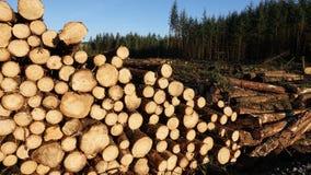 De besnoeiing opent woodpile het programma Royalty-vrije Stock Fotografie