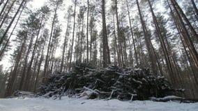 De besnoeiing registreert en takken van een boomboomstam liggend in het bos in sneeuw gedeeltelijk wordt behandeld die stock video