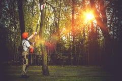 De Besnoeiing van boomtakken stock foto's